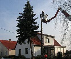 Baumpflege - Baumsanierung, Baum fällen,  Baumpflege mit Hubsteiger, Antrag stellen für Fällgenehmigung